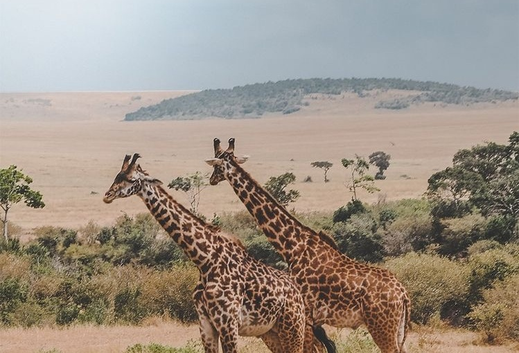 Safari Adventure in Namibia
